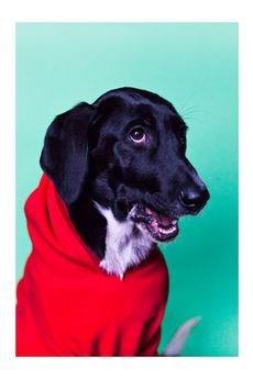 NEON for dogs - CZERWONA BLUZA DRESOWA, L