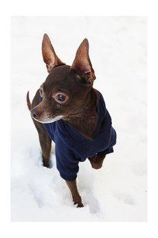 NEON for dogs - GRANATOWA BLUZA, XS