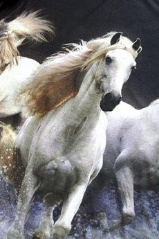 T shirt white horses  149 pln 2 m
