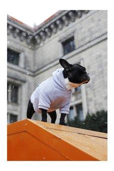 NEON for dogs - Szara BLUZA DRESOWA, XL