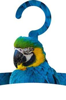 BAHABAY - Wieszak Parrot