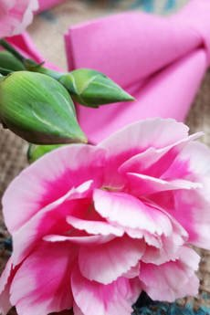 EDYTA KLEIST - Mucha Różowy Diament