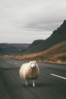 """BITE OF ICELAND / by Adam Biernat - FOTOGRAFIA KOLEKCJONERSKA """"OWCA NA SZOSIE"""""""