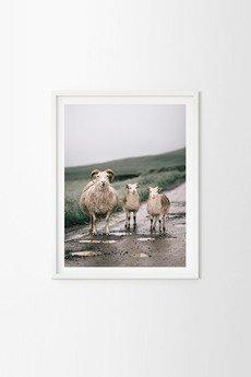 """BITE OF ICELAND / by Adam Biernat - FOTOGRAFIA KOLEKCJONERSKA """"OWCZA FERAJNA"""""""