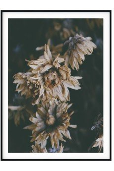 myscandishop - Plakat botaniczny Dried Flowers