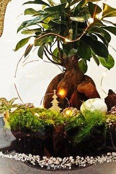 Słoik lasu - pracownia natury - Las w w słoiku Bonsai Gold